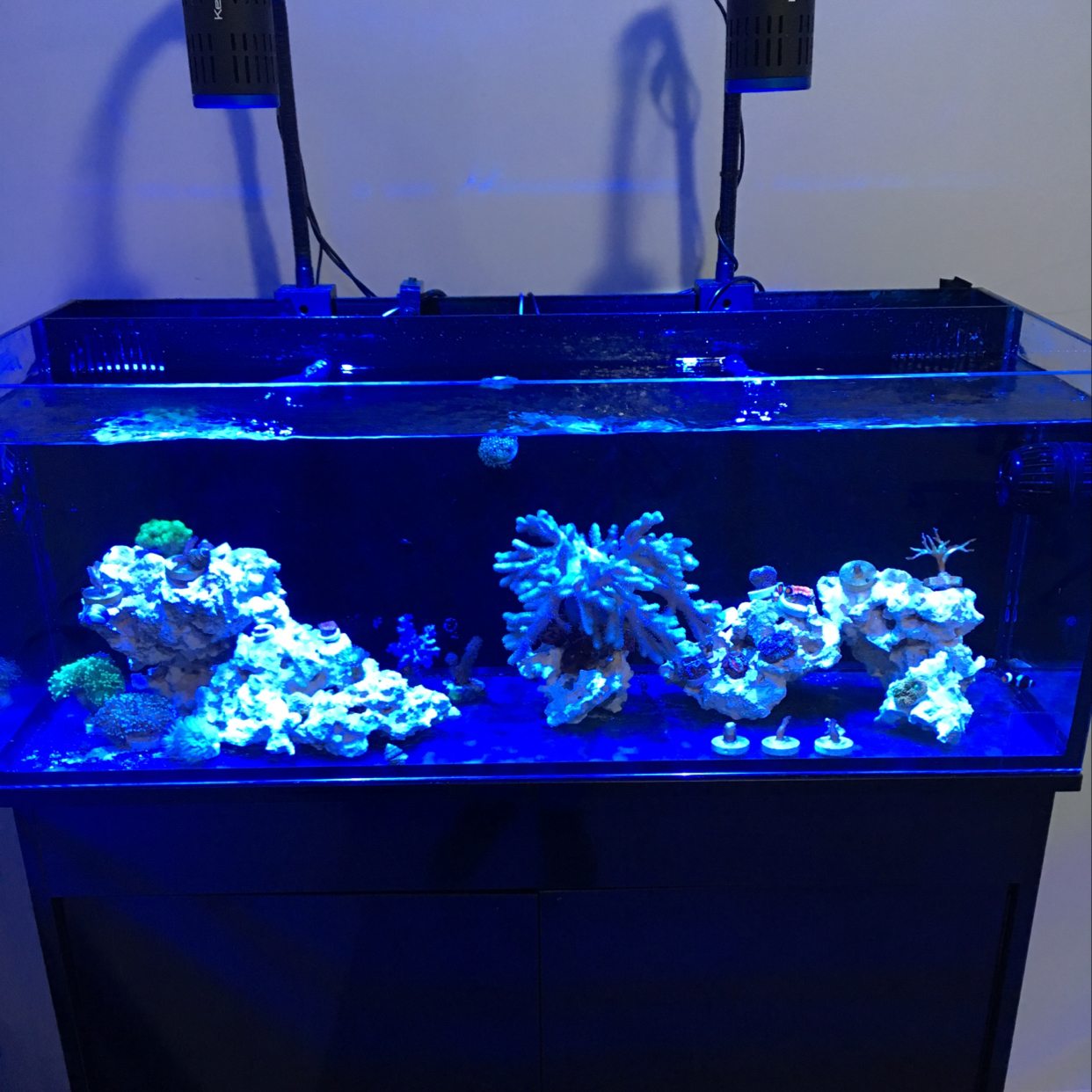 Innovative Marine 30 Coral System on Feb 12, 2019