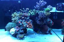 Ventino's reef on Mar 5, 2019