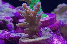 40G Mixed Reef on Mar 9, 2019