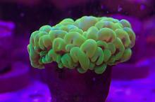 40G Mixed Reef on Mar 13, 2019