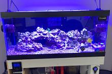 40G Mixed Reef on Mar 17, 2019