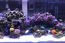 Scott 140 Aquarium Thumbnail