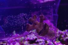 40G Mixed Reef on Apr 13, 2019