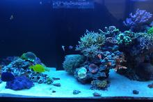 Ventino's reef on Apr 16, 2019