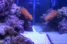 55 Gallon Reef Tank Thumbnail