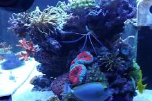 Ventino's reef on Apr 19, 2019