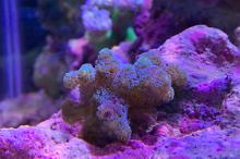40G Mixed Reef on Apr 24, 2019