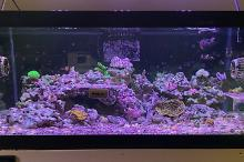 40G Mixed Reef on May 3, 2019