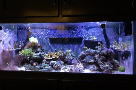 75 Gallon Mixed Thumbnail