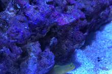 small mixed reef Thumbnail