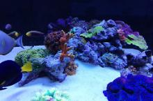 Ventino's reef on May 28, 2019