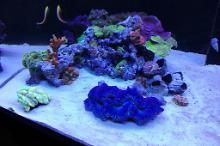 Ventino's reef on May 30, 2019