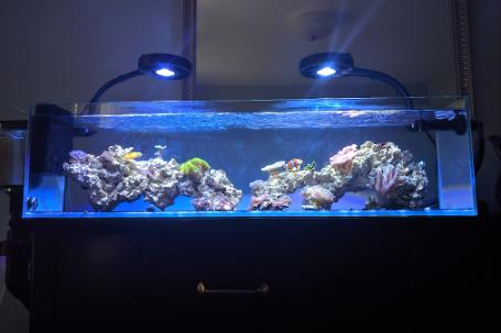 12G Long - Nano Reef Thumbnail