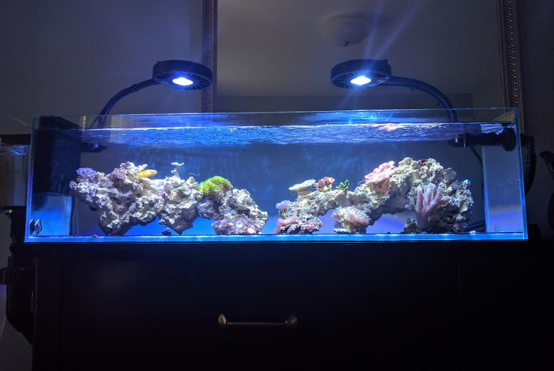 12G Long - Nano Reef on Jun 3, 2019