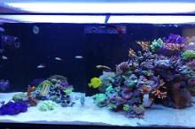 Ventino's reef on July 2, 2019