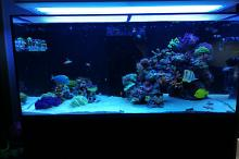 Ventino's reef on Jul 9, 2019