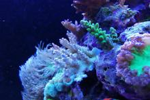 Ventino's reef on Jul 16, 2019
