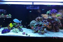 Ventino's reef on Jul 25, 2019