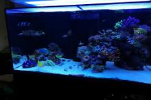 Ventino's reef on Aug 12, 2019