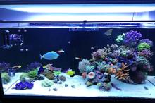 Ventino's reef on Sep 12, 2019