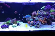 Ventino's reef on Sep 19, 2019