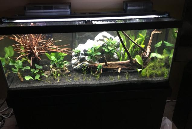 75 Gallon on Oct 7, 2019