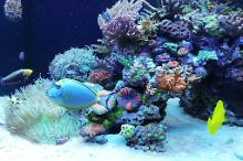 Ventino's reef on Oct 18, 2019