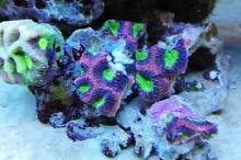 Ventino's reef on Oct 21, 2019