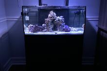 Reef Display Tank Thumbnail