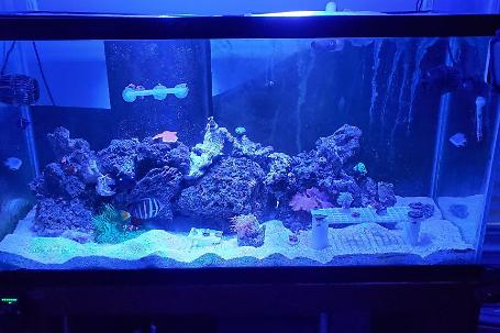 90g Mixed Reef on November 5, 2019
