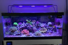40G Mixed Reef on Nov 17, 2019