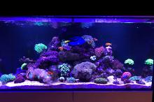 My Aquarium on Nov 17, 2019