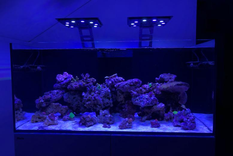 My Aquarium on November 27, 2019