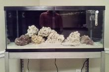 The 40 Gallon Thumbnail
