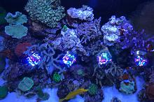 My Aquarium on Dec 24, 2019