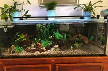 Adam home tank on Jan 4, 2020