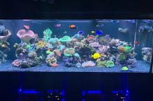 300 Reef on Jan 6, 2020