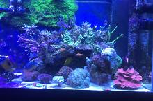 Our mixed Reef Thumbnail