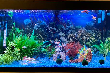 Tropical tank 200L (picked by a 6 year old) Thumbnail