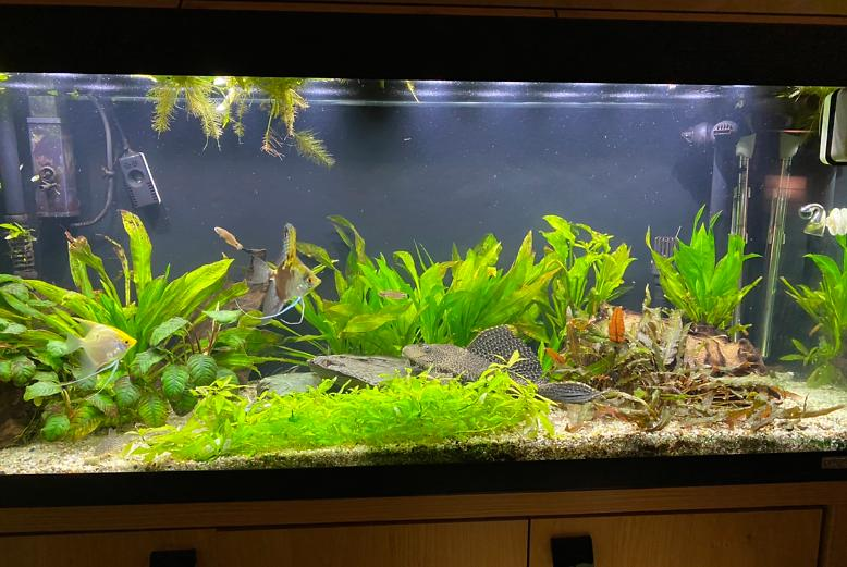 My Aquarium on Jan 30, 2020