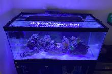 Aqueon 40 Gallon Breeder Thumbnail
