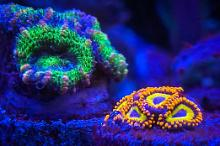 First Reef (Waterbox cube 20) Thumbnail