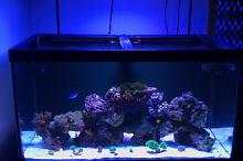 53 Gallon Reef Thumbnail