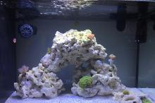 Saltwater first tank Thumbnail