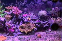 40G Mixed Reef on Feb 19, 2020