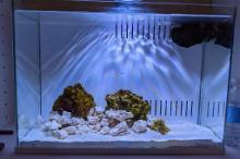 5 Gallon Pico Reef Thumbnail