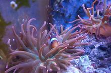 Riverita's Reef Thumbnail