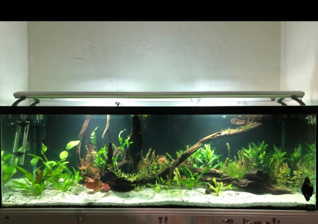 Discus tank on Mar 14, 2020