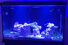Reef 30 gallons tall Thumbnail