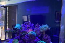 Red Sea Reefer 170 Thumbnail